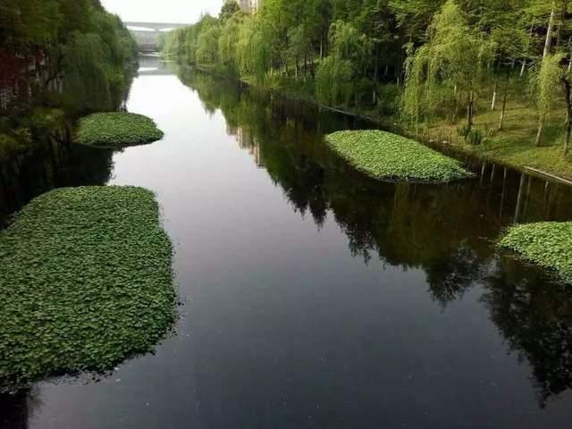 合肥试点微生物生态浮床为水体除黑臭