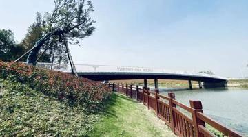 桥上风景独好!9座桥串起长宁外环林带生态绿道